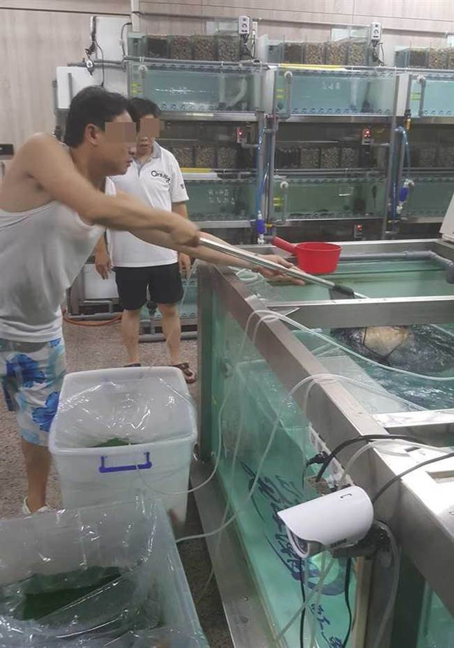 曾煥嘉在板橋文化路上的服務處地下室中,放置大型水缸,專門繁殖養育高價稀有魟魚。(圖/讀者提供)