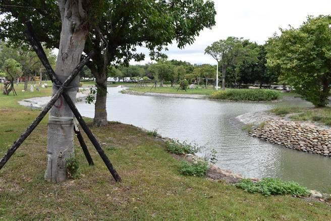 竹南運動公園擴建造型生態水池。(謝明俊攝)