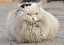 愛貓夏天冷氣吹太兇 驚人變化飼主嚇呆