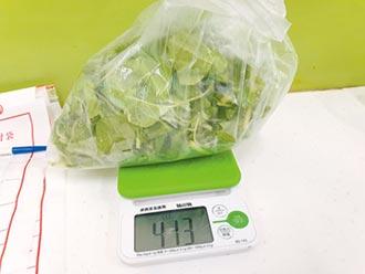 北市蔬果抽驗 南瓜杏菜農藥超標