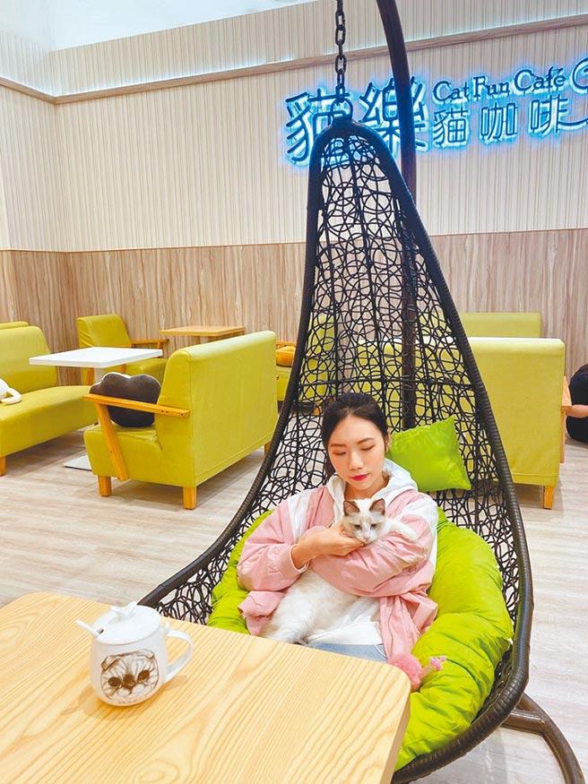 Global Mall新北中和店全新的「貓樂貓咖啡」,為百貨獨家大型貓咪咖啡館。(Global Mall提供)
