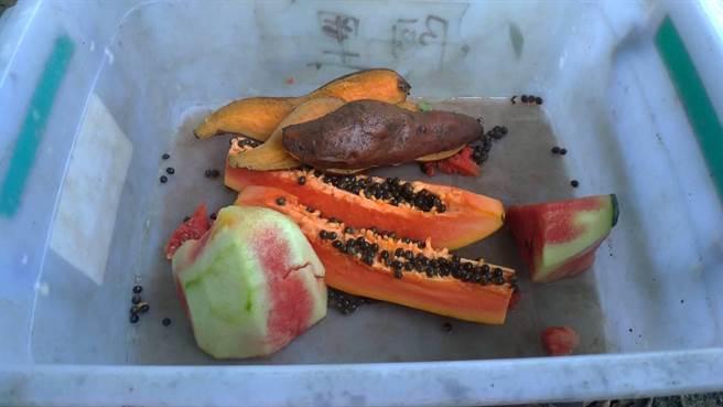 獸醫師給予900公克地瓜、西瓜及木瓜等蔬果,編號711台灣黑熊馬上吃完。(東勢林管處提供/王文吉台中傳真)