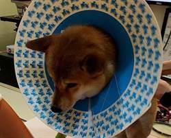 帶狗如廁遭攻擊 她痛批飼主冷眼旁觀