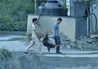 外籍移工遭檢舉私宰豬狗 中市動保處送驗追查