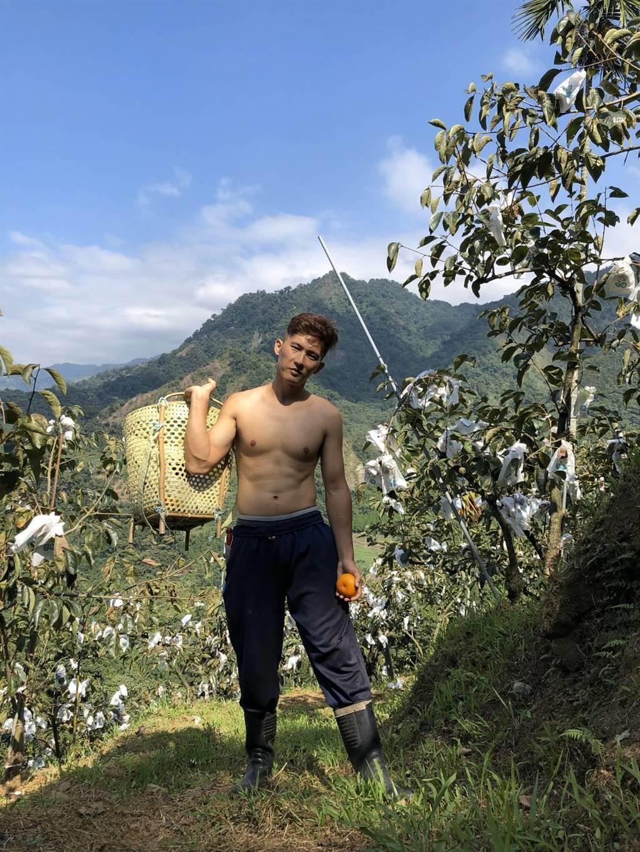 30歲泰雅族青農黃曉橙種植桂竹及甜柿,每天除草施肥,讓他自然練就六塊肌好身材。(黃曉橙提供/王文吉台中傳真)