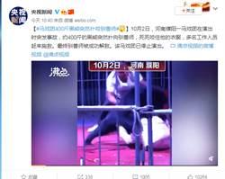 200公斤黑熊失控爆衝 馴獸師遭瘋狂嘶咬 驚悚影片曝光