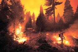 AI能降低野火風險?