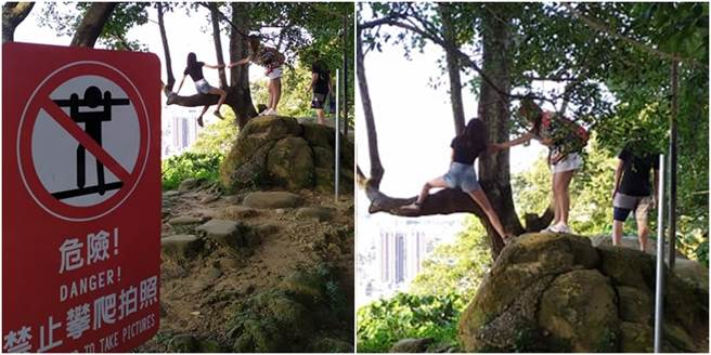 幾名年輕女孩為拍美照,不顧一旁的警示牌,仍跨越護欄攀樹,讓人看了膽戰心驚。(圖/翻攝自爆廢公社)