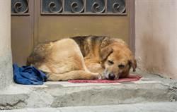 主人奶奶過世5年 忠犬苦守家外不願被養網淚目
