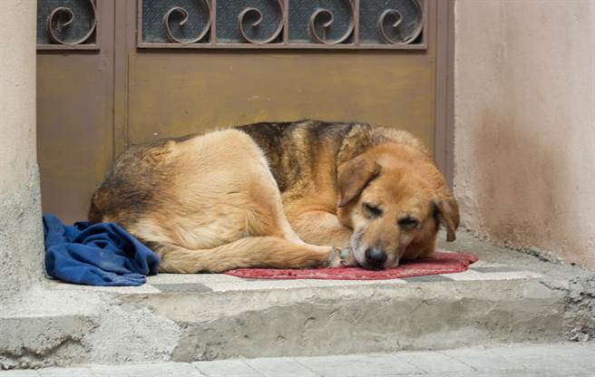 主人奶奶過世5年 忠犬苦守家外不願被養網淚目(示意圖/達志影像)