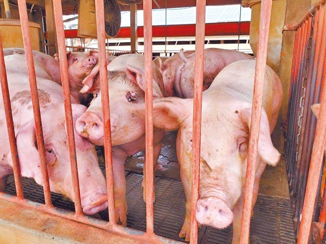雲林縣衛生局修正食安管理條例,縣內豬肉品及加工品只要檢出瘦肉精就罰。(周麗蘭攝)