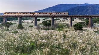 頭前溪芒草搭配內灣線火車 全台拍秋芒八大景點之一