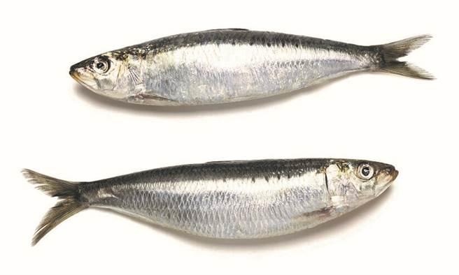 部分魚類維生素D含量高,有助鈣質吸收。(圖片來源:陳弘璋)