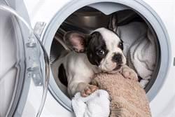 洗衣店惊见小狗「受困翻搅」吓坏 饲主澄清:还活着