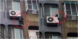 北市萬華市區上演「猩球崛起」 影片曝光網笑:帝國大廈打飛機