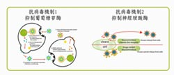 京冠生技綠豆殼 取得發明專利