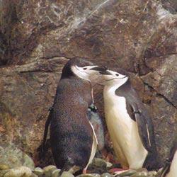 企鵝成長歷程 海生館限定展