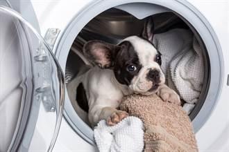 洗衣店驚見小狗「受困翻攪」嚇壞 飼主澄清:還活著