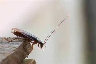 蟑螂的問題其實在我們身上