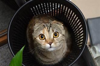 丟舊衣聽到回收箱傳出淒厲貓叫 急報警撬開眾人全傻眼