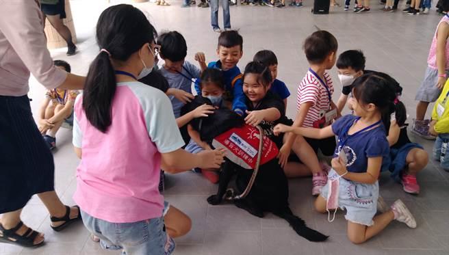台中市北區太平國小日前結合台灣導盲犬協會舉行「導盲犬宣導活動」讓導盲犬走進校園當生命老師,透過孩子喜歡親近小動物,了解導盲犬工作。(讀者提供/張妍溱台中傳真)