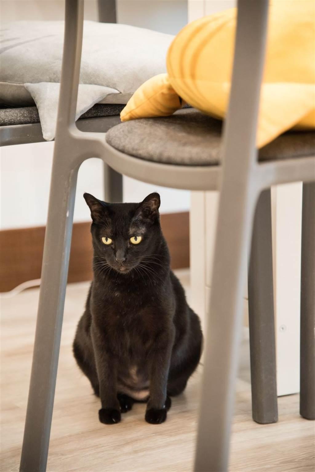 客廳成為Socles和小花的地盤,兩隻淑女型的貓咪輕巧自在的生活在其中,Socles在也不必害怕被其他公貓追逐了!