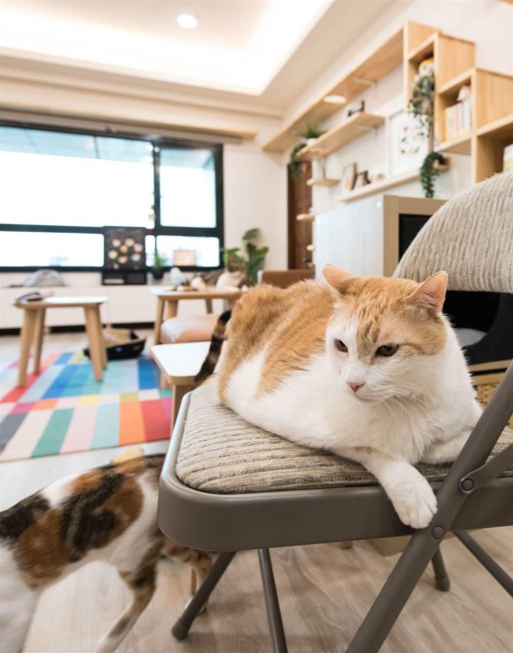 養貓的家庭盡量選擇高樓層的出租物件,有效避免野貓叫聲對家貓產生的影響。發摟《黃阿瑪的後宮生活》看貓咪們的新後宮生活~@fumeancats