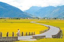 首度10月減壓供水 池上稻田輪灌