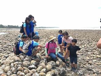 桃園笨港國小推食魚教育 讓孩子浸潤海客文化