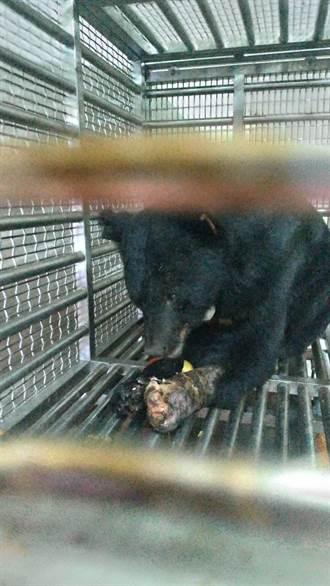 東卯山台灣黑熊有點挑食 獸醫師爆料牠不太愛吃這些