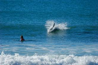 空拍機見巨鯊緩緩接近衝浪男 驚險22秒畫面全曝光