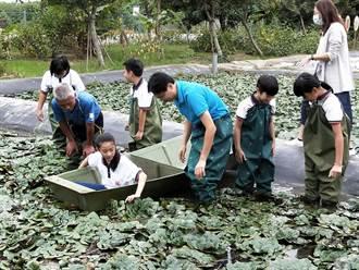 划船採菱角手忙腰痠 官田國小學童體驗菱農辛勞
