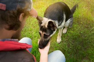 反對兒養狗怒吼「我不餵」 偷瞄抓包爸被收服超展開