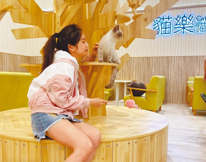 Global Mall 新北中和店帶來了全台百貨獨家的「貓樂貓咖啡」。(Global Mall提供)