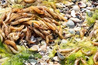 不明劇毒物質流入海洋!沙灘遍地屍體 海底更驚悚