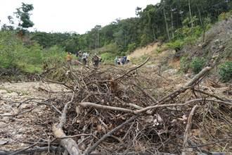 新社砍樹造林惹議 立委會勘檢討林業經營政策