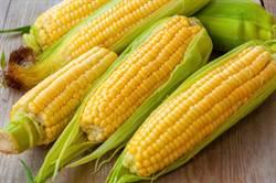 玉米不是蔬菜?營養師曝「驚人身世」:吃錯1周胖2kg