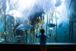 8歲男童天真問「怎麼沒人」水族館員超直球神回覆笑翻全網