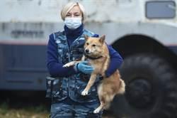 俄羅斯訓練嗅探犬在機場找出感染新冠病毒旅客