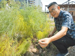 竹市將軍村食物森林 用勞動換飲食