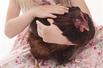 妹子喝太茫「把雞強抱回家收編」酒醒一看傻了