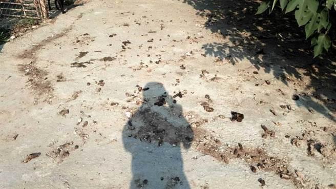 蔡男的狗園環境髒亂不堪,地上滿滿都是大便與排泄物。(圖/讀者提供)