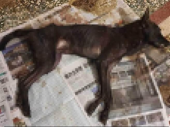 蔡男3到5天才餵食一次,狗兒被餓到肋骨可見慘死。(圖/讀者提供)