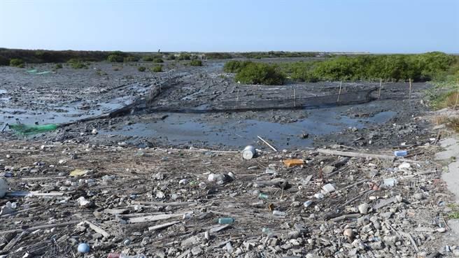 彰化大城鄉台西村位於濁水溪出海口北岸,是全台灣最大、密度最高的台灣招潮蟹棲地,卻因海流因素與外來海濱植物佔據,成為海漂垃圾匯集大熱區。(彰化縣環境保護聯盟提供/謝瓊雲彰化傳真)