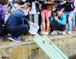 北台灣海洋資源更蓬勃 侯友宜放流黃錫鯛魚苗、九孔苗「盼漁業永續發展」
