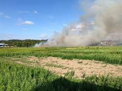 天乾物燥風勢助長 苗縣農田引火整地竄濃煙眾人怨