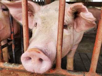 雲林縣明年起抽驗瘦肉精豬肉多3倍 「原產地標示」同步稽查
