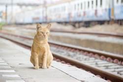 虎斑搭高鐵逃票被抓包 車長親自監督「小碎步離開」