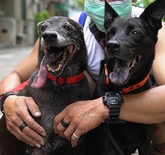 有洋蔥!單親媽搶救罹患腫瘤狗媽媽 狗女兒捐血救命