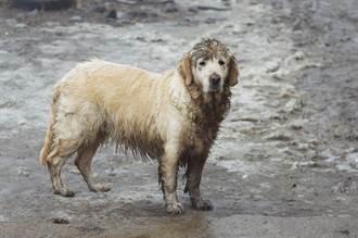 愛犬走失3個月街上重逢 突聽到主人聲音「飛撲懷裡啜泣」